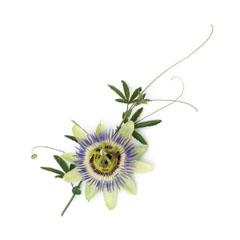 Passion flower oil